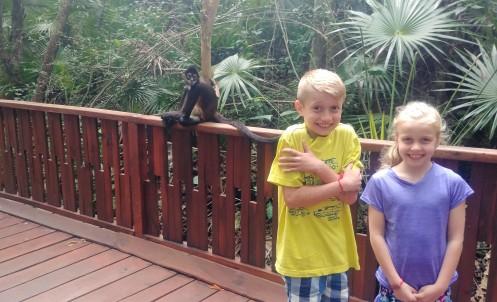3.14.18 Playa_Cenote_More Monkeys! (3)