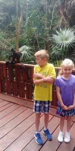 3.14.18 Playa_Cenote_More Monkeys! (4)