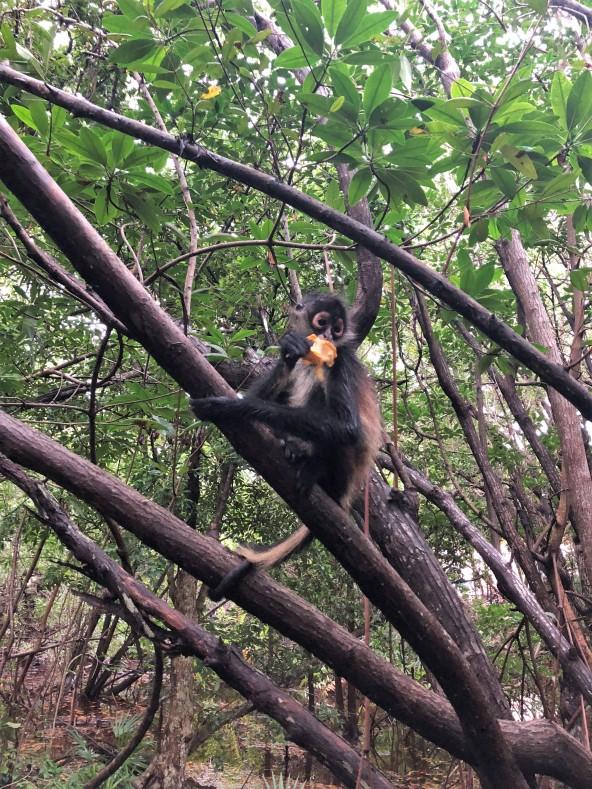 3.9.18 Playa_Arrival day_Monkeys! (11)