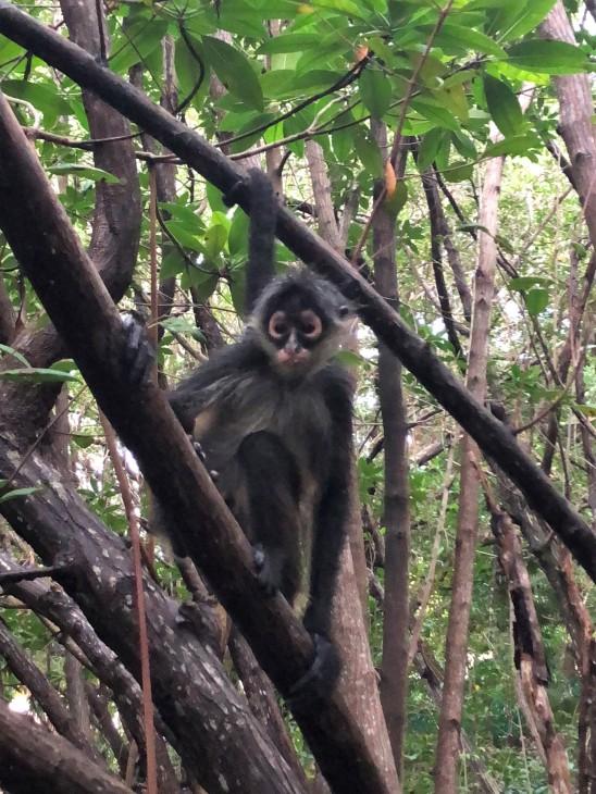 3.9.18 Playa_Arrival day_Monkeys! (5)